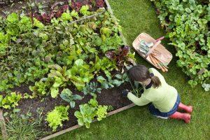 Mau Berkebun di Rumah yang Menghasilkan? Tips Penting ini Tidak Boleh Anda Lewatkan